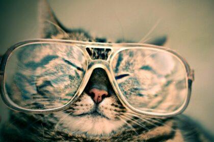 Brillen in verschillende vormen, maten en kleuren welke past er op jouw neus