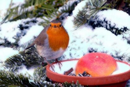 Geniet ook in de winter van je tuin zo doe je het