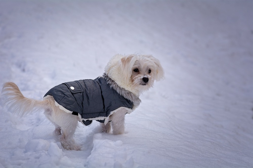 Zo help je je huisdier door de koude winter